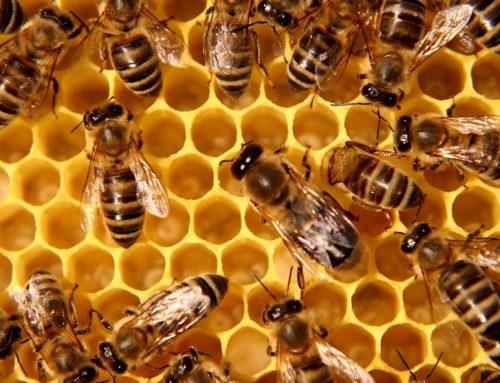 Frasi, citazioni e aforismi sulle api e sul miele