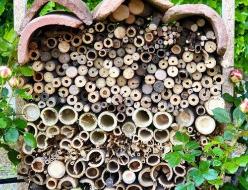 Una nuova Wild Bee Home per l'Eremo Elgram