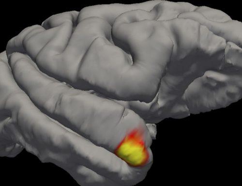 Sono stati scoperti i neuroni che ci aiutano a ricordare i volti